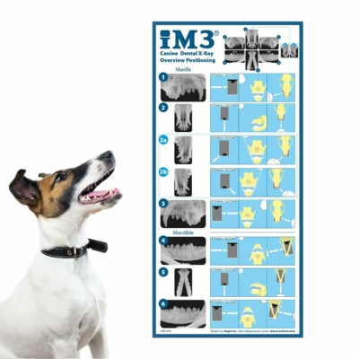 Canine Positioning Poster A3