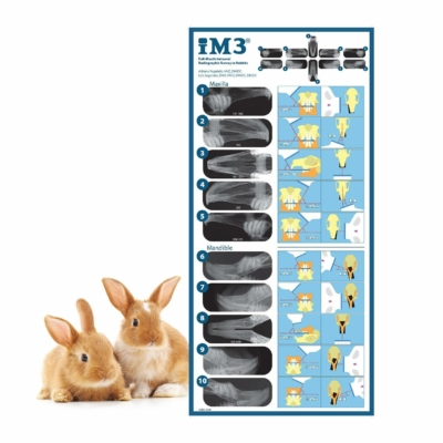 Rabbit Positioning Poster A3